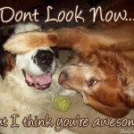 awesome_dogs