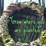 grow_where_planted