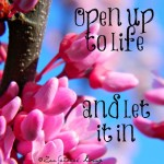 open to life - Copy